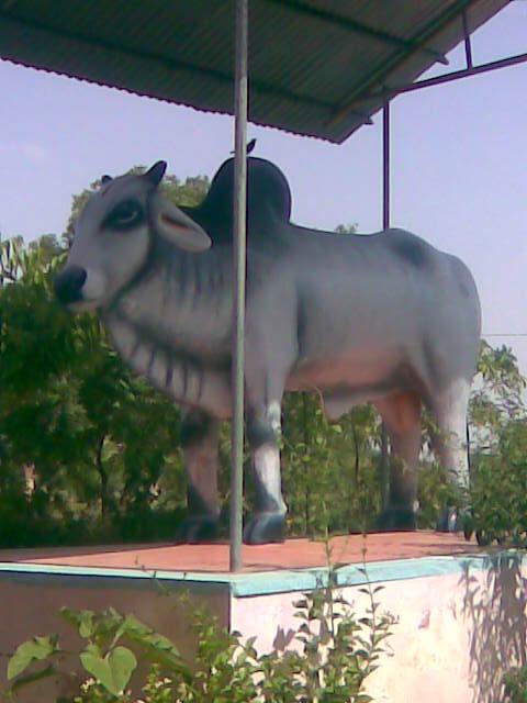 at bagdiya dham.jpg